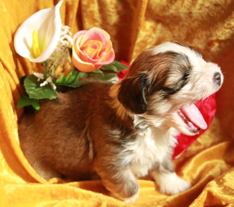 kennel med allergivenlige hunde